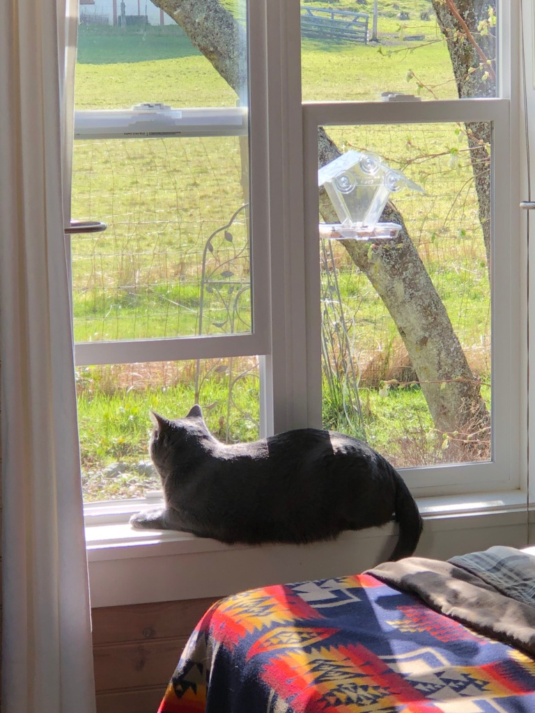 after-the-rain.org / Cat on a windowsill