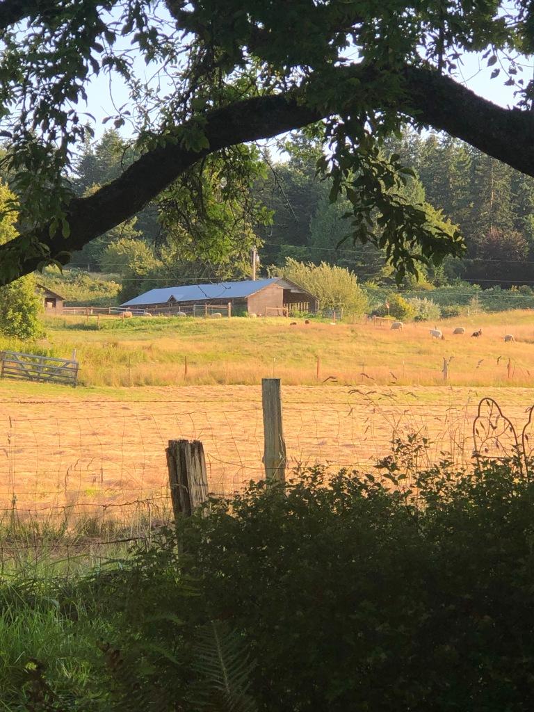 after-the-rain.org / Sheep farm